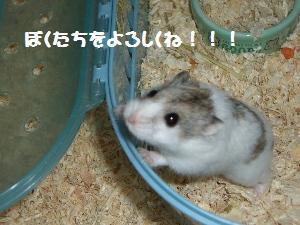 mako9.18.2.jpg