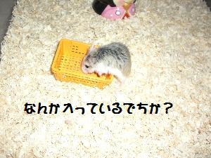 sasuke8.7.2.jpg