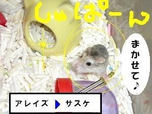 sasukechann.jpg