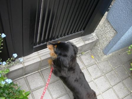 2007_0516kikiburogu0010.jpg
