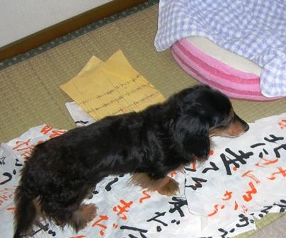 2007_0526kikiburogu0001.jpg