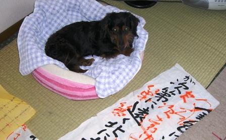 2007_0526kikiburogu0002.jpg