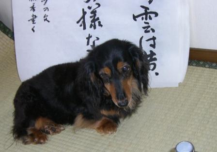 2007_0528kikiburogu0007.jpg