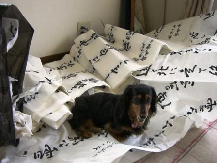 2007_0613kikiburogu0012.jpg