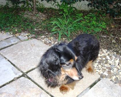 2007_0718kikiburogu0003.jpg