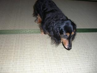 2007_0721kikiburogu0051.jpg