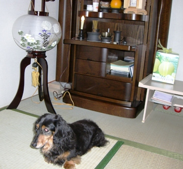 2007_0803kikiburogu0001.jpg