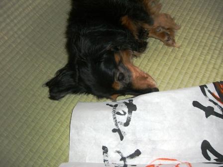 2007_0921kikiburogu0005.jpg