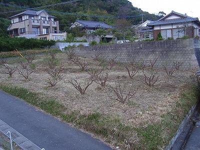 20061107164520.jpg