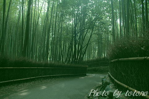 07arashiyamatikurin007.jpg