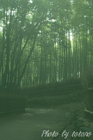 07arashiyamatikurin011.jpg