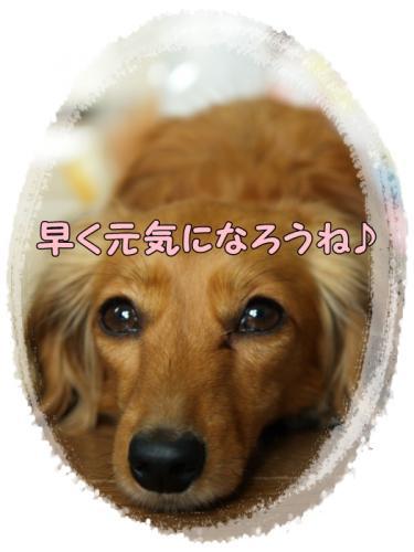 154_20110510211835.jpg
