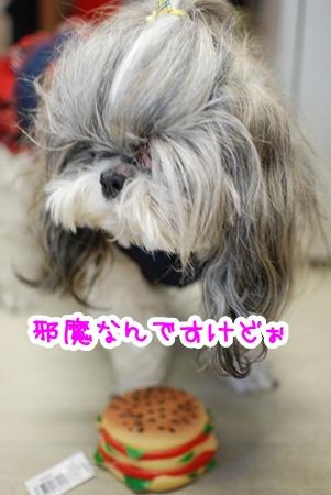 DSC_7866_20110727190838.jpg