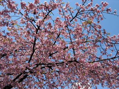桜2012.4.2