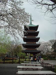 上野公園桜③