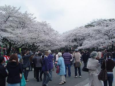 上野公園桜④