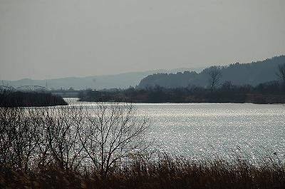 お昼の信濃川2