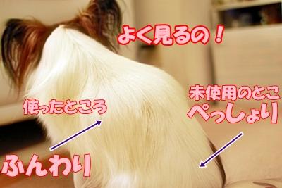 10_20111211154628.jpg