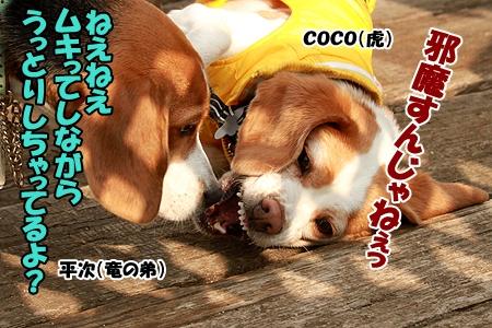 11_20120305225921.jpg