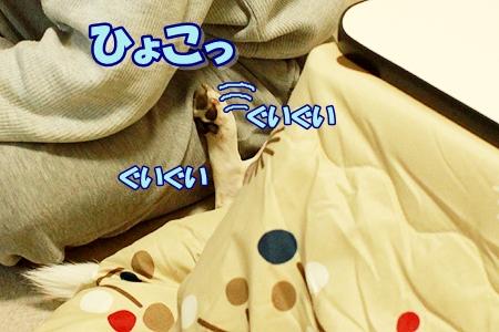 1_20111125232910.jpg