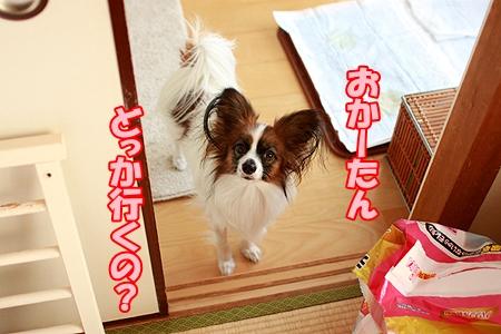 1_20120105202525.jpg