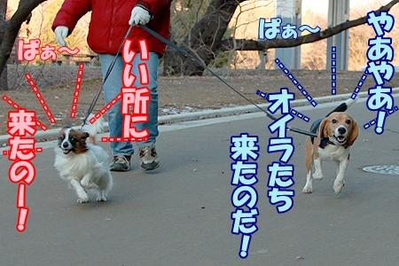 1_20120129223451.jpg