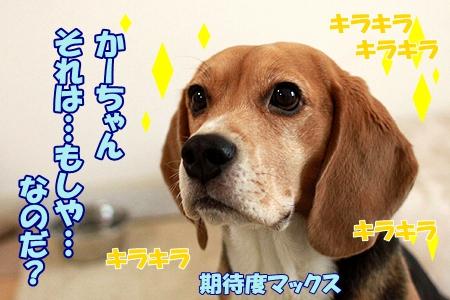 1_20120131233422.jpg