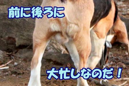 1_20120214000640.jpg