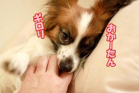 1_20120323234309.jpg