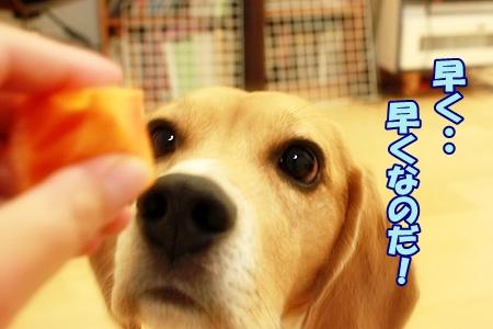 2_20111120225046.jpg