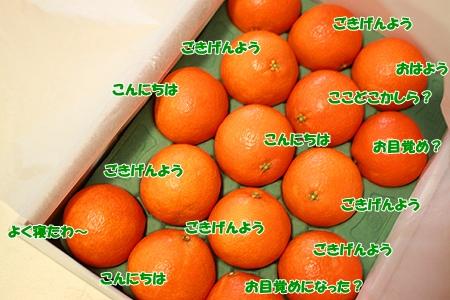 2_20111223210852.jpg
