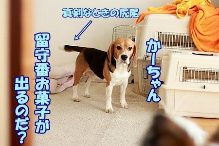2_20120105202525.jpg