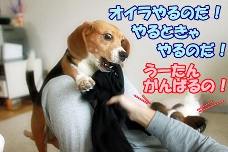 2_20120125225212.jpg