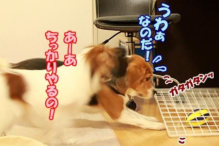 2_20120201224738.jpg