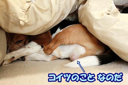 2_20120204224808.jpg