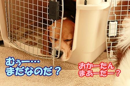 2_20120210125403.jpg