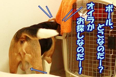 2_20120310224142.jpg