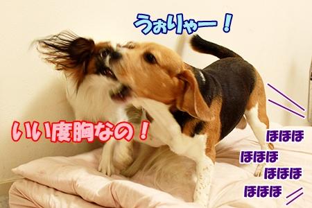 3_20111201221945.jpg