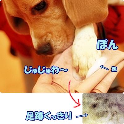 3_20111211154715.jpg