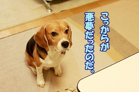 3_20120103230151.jpg