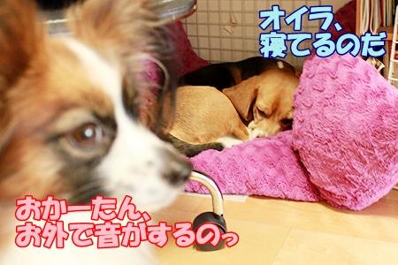 3_20120127225634.jpg