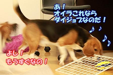 3_20120201224738.jpg