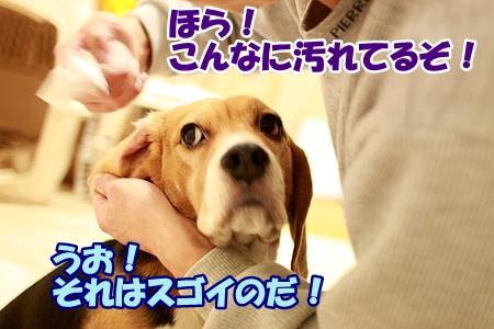 3_20120225000454.jpg