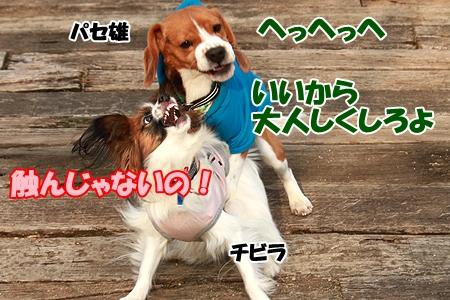 3_20120307222728.jpg
