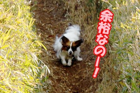 3_20120328233808.jpg