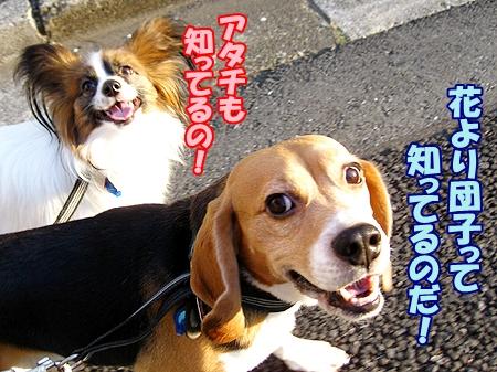 3_20120408231809.jpg
