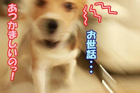 4_20111229222003.jpg