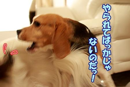 4_20120102233907.jpg