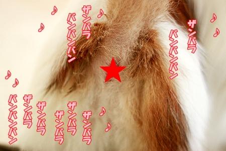 4_20120103230151.jpg