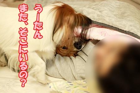 4_20120105202524.jpg